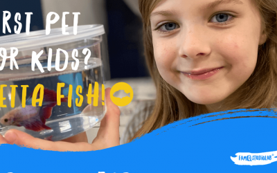 NUMBER 1 PET FOR KIDS EASY TO TAKE CARE OF? 73 RECOGNIZED BETTA FISH SPECIES TO SELECT FROM!