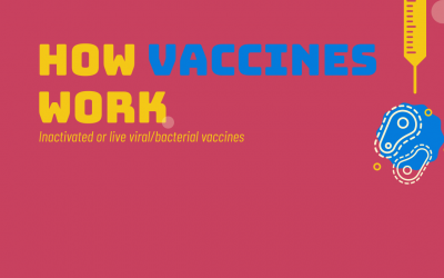 How vaccines work? 4 Steps Infographic
