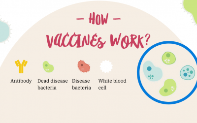 How Vaccine Works in 3 Steps Easy Infographic?